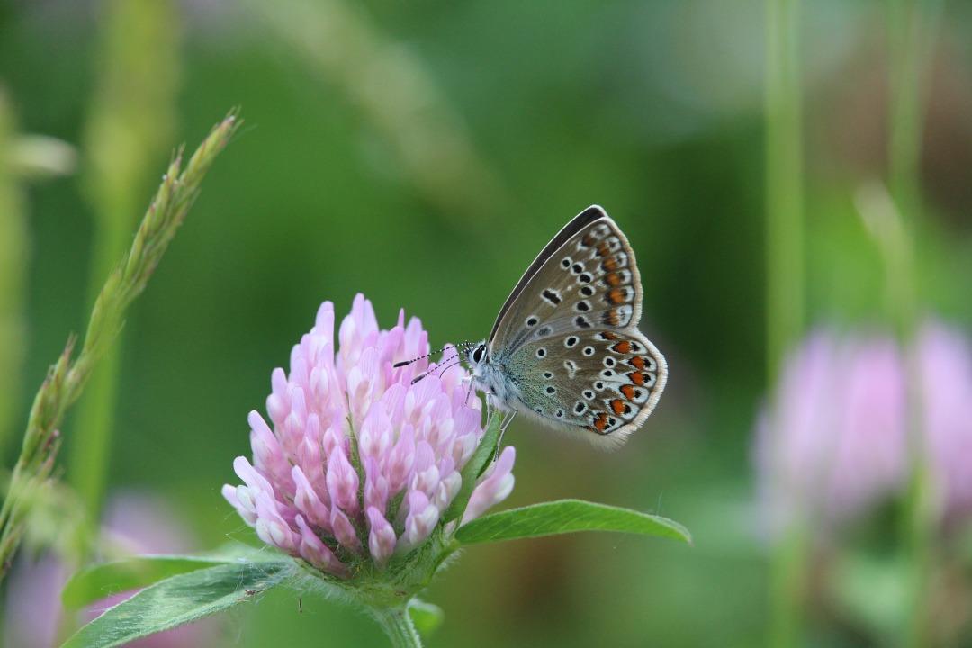 15 16 vlinders