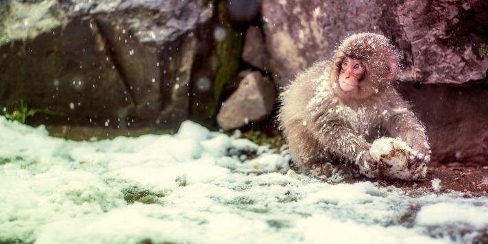aapje in de sneeuw