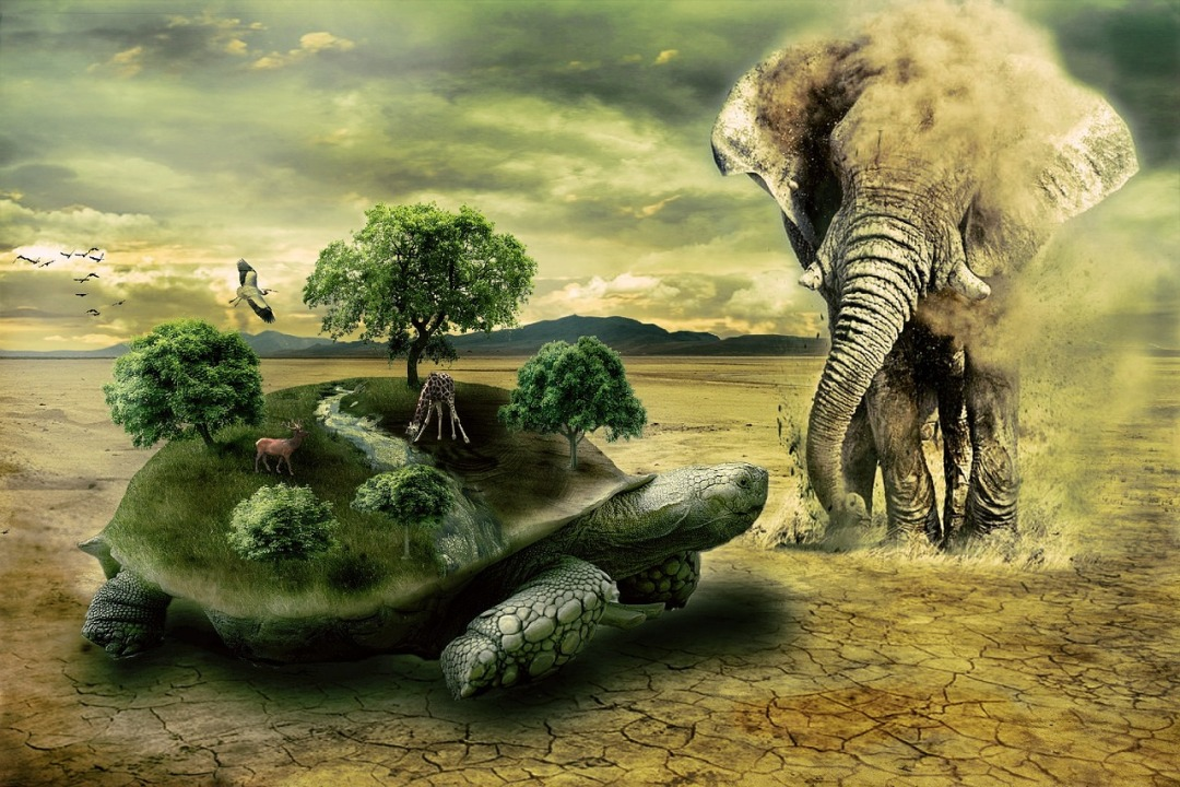 schildpad 25 26